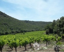 "Wine not invest in Languedoc's luxury ""art de vivre""?"
