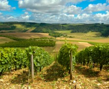 Five vineyards for sale in Provence