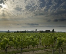 Home Hunts Launches Bespoke Vineyard Service