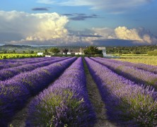 Now you can travel from London to Provence in less than six hours!