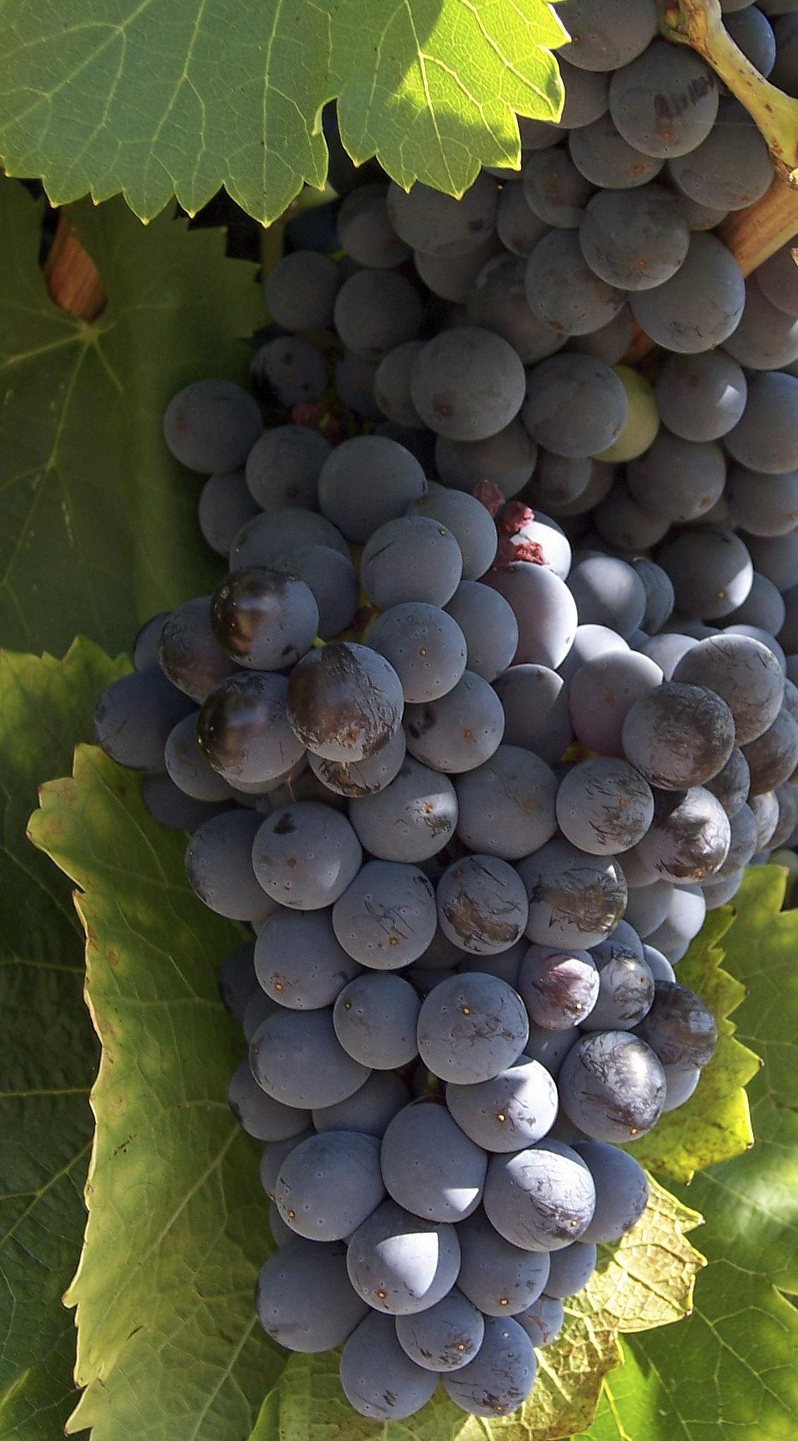Open the door – A vineyard/wine domaine