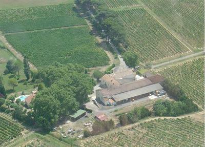 penzenas-vineyard1