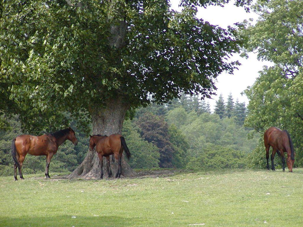 horses_grazing_trees_1024