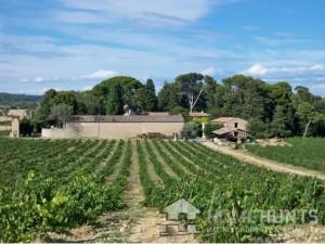 montpellier vineyard