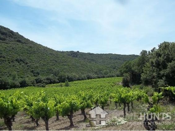 """Wine not invest in Languedoc's luxury """"art de vivre""""?"""