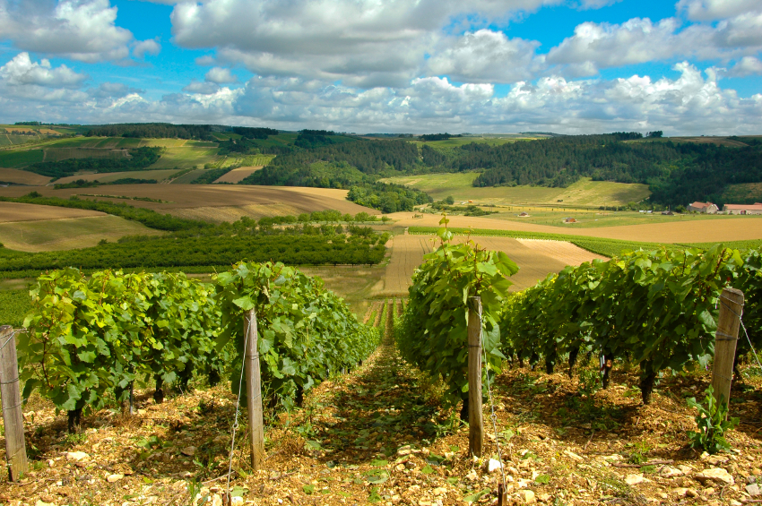 French vineyard sales boom for Home Hunts