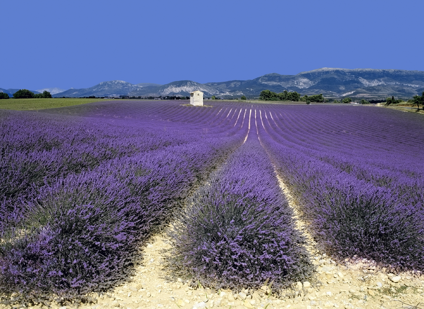 Property insights for Provence revealed by Home Hunts