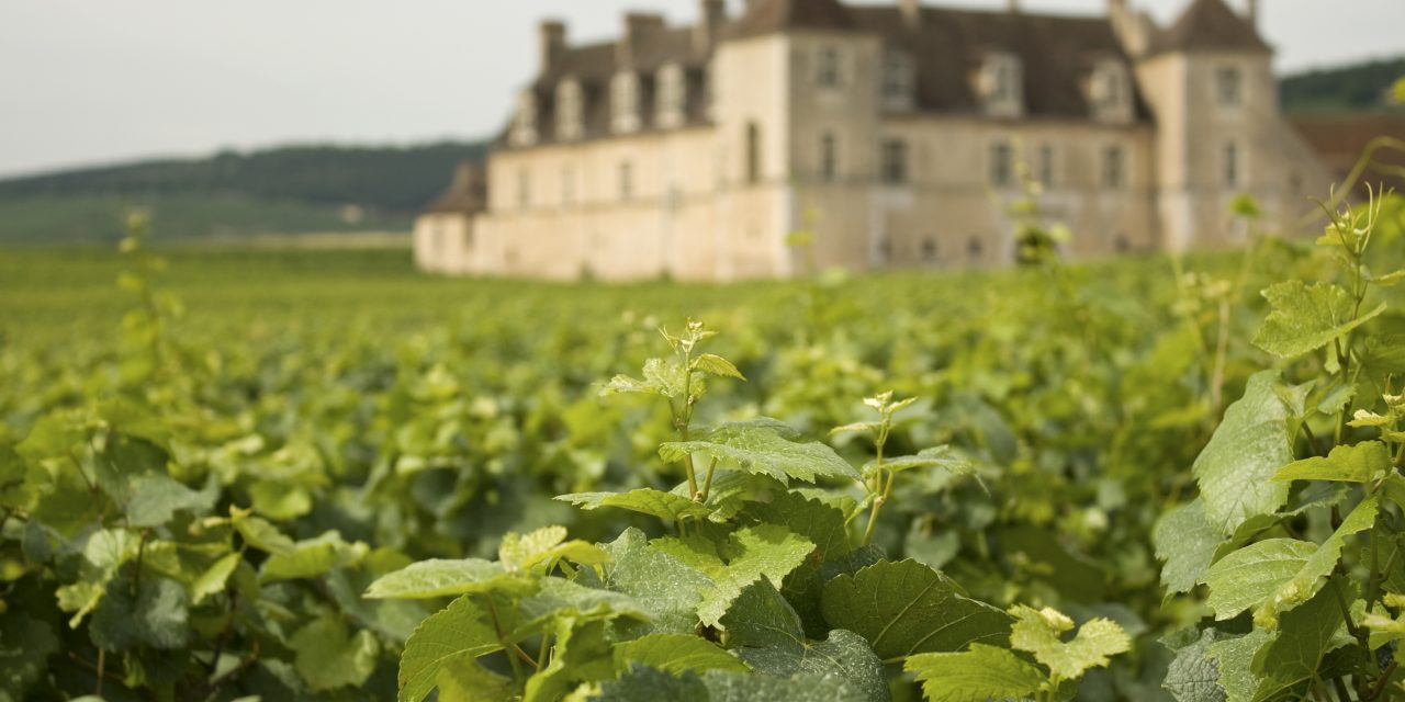 Eight common questions asked by vineyard buyers in France
