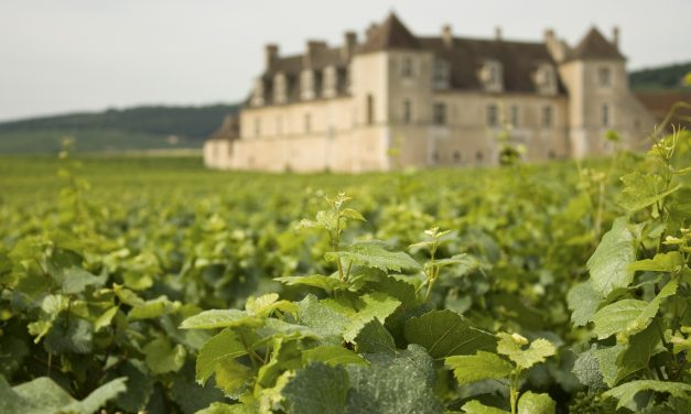 Eight common questions asked by buyers of vineyards in France
