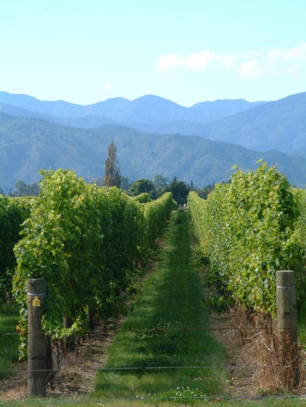 Home Hunts Launches Bespoke Vineyard Service