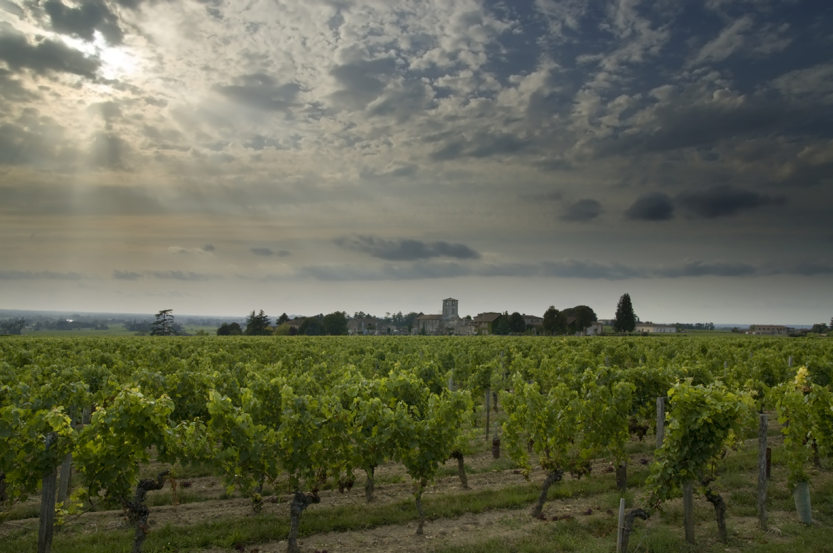 France leads global race for wine production and sales