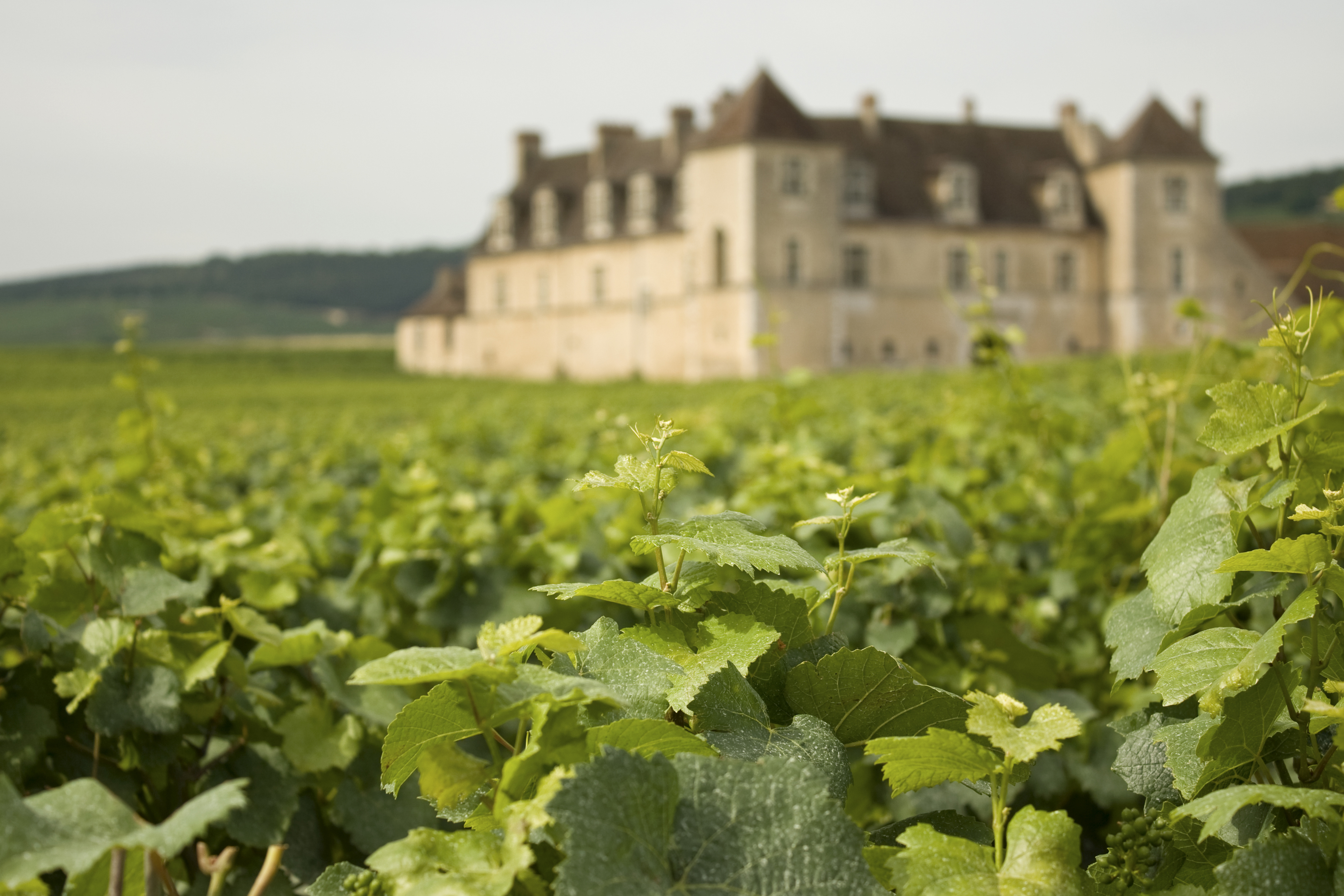 France highest earning country in the world for wine exports