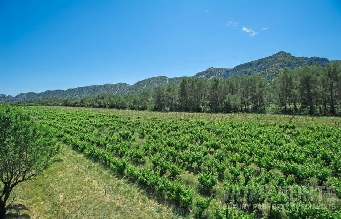Six vineyards offering a dream Provencal lifestyle