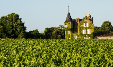 Vineyards and Chateaux: Some of the Best Properties in South West France
