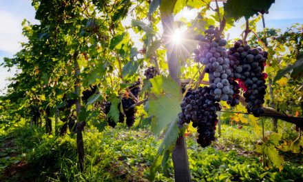 How to create a lifestyle around your passion for wine